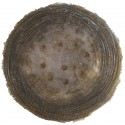 Shield Glass - 5