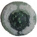 Shield Glass - 7